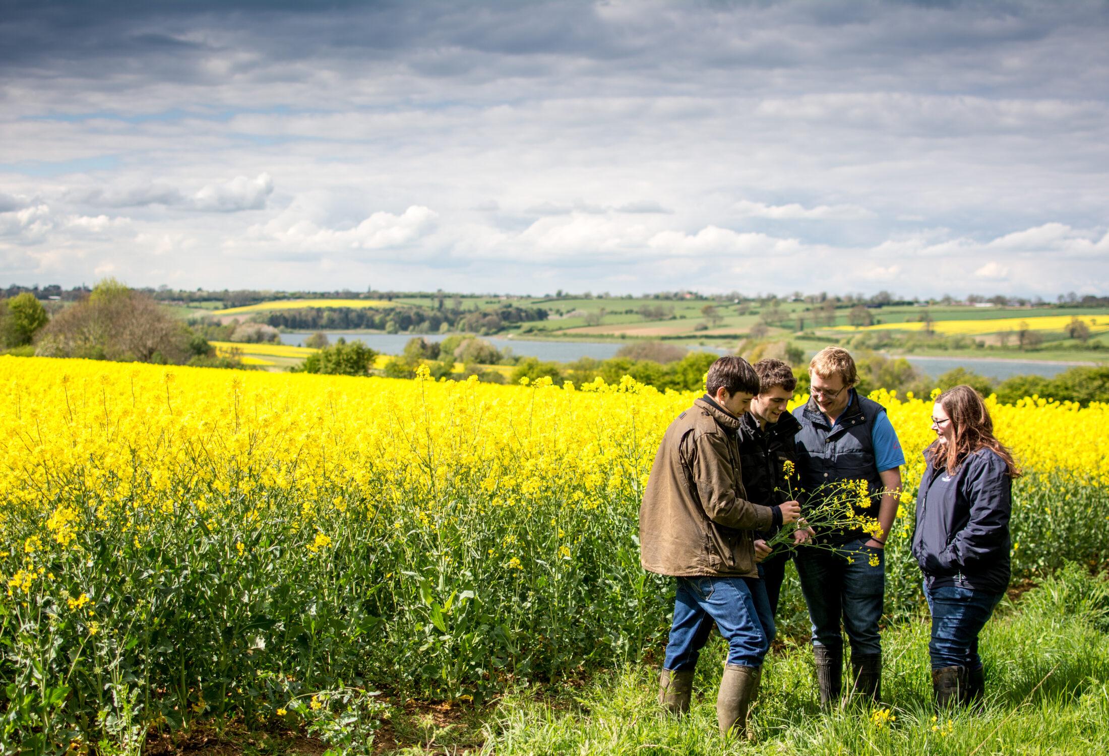 Students in field examining crop