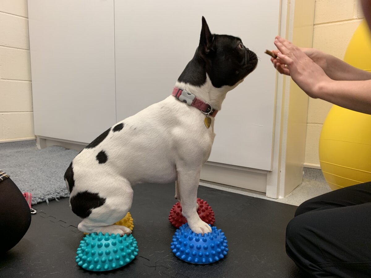 Physiotherapy four prickle-ball sit