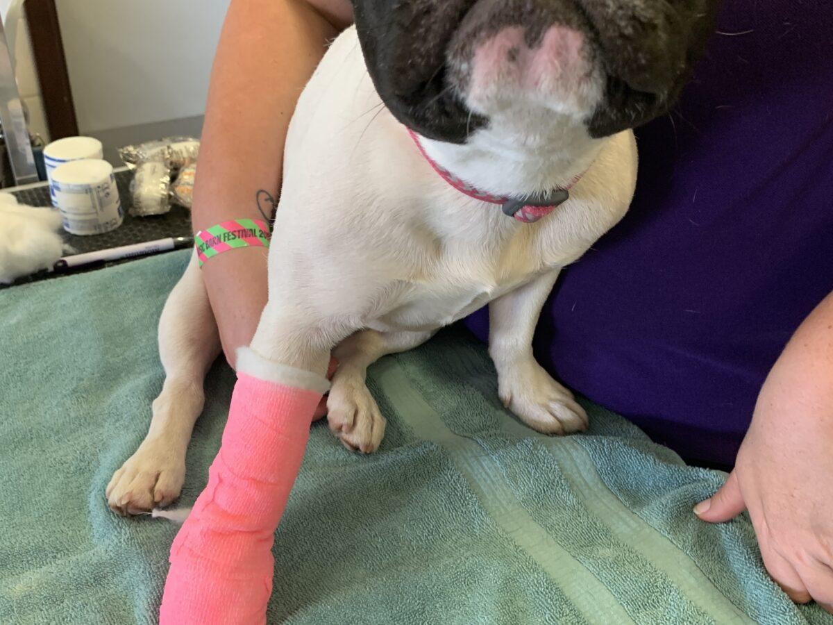 Dotty's bandage