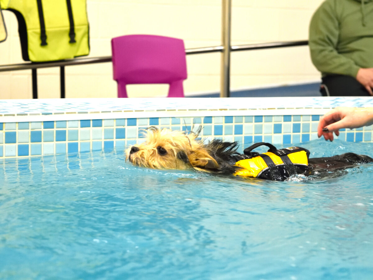 Hydrotherapy Pool - Swimming Therapy