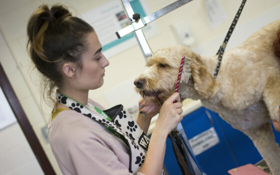 Moulton College Dog Grooming ATC