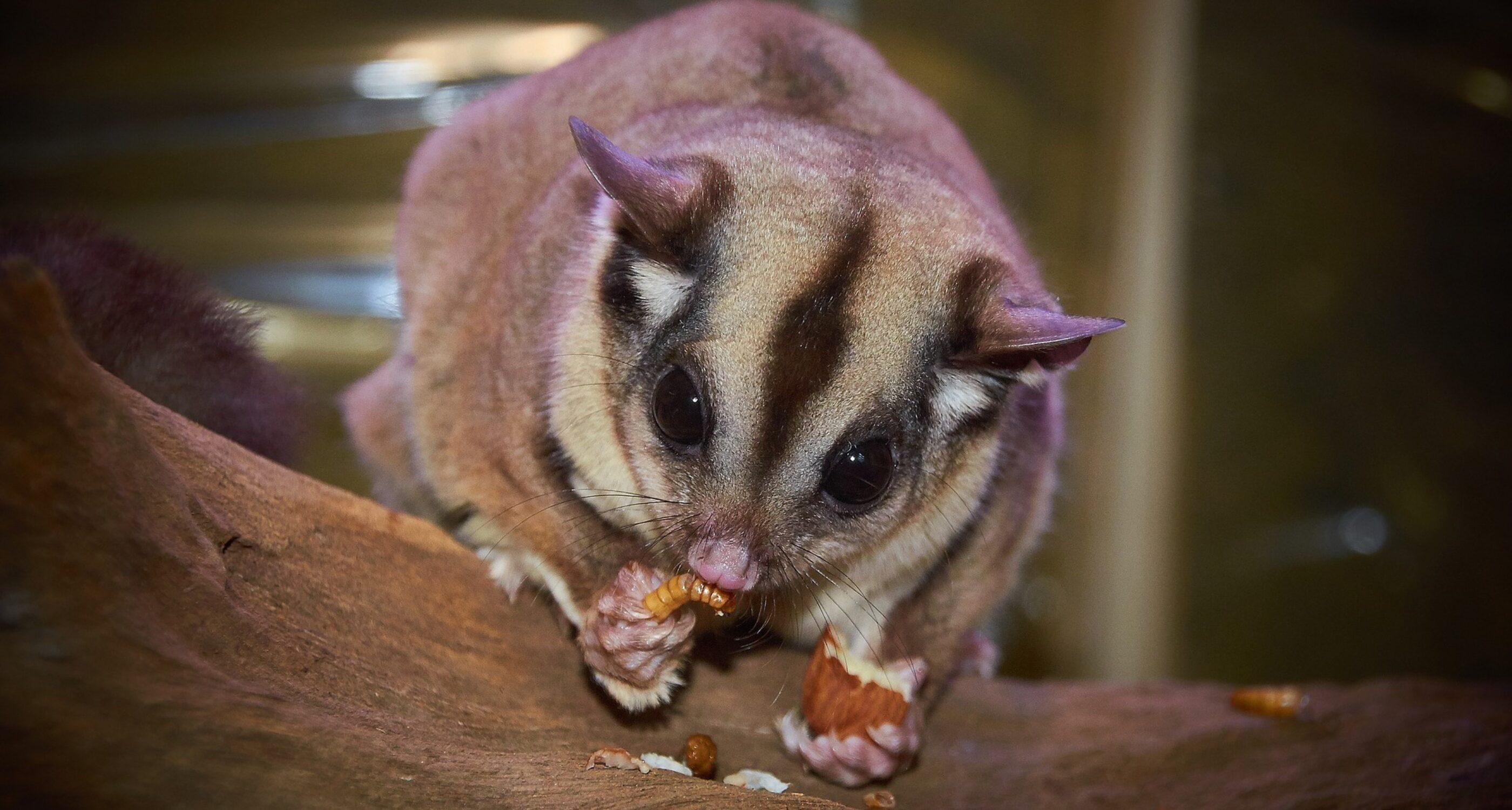 Australian wildlife 1675479 1920