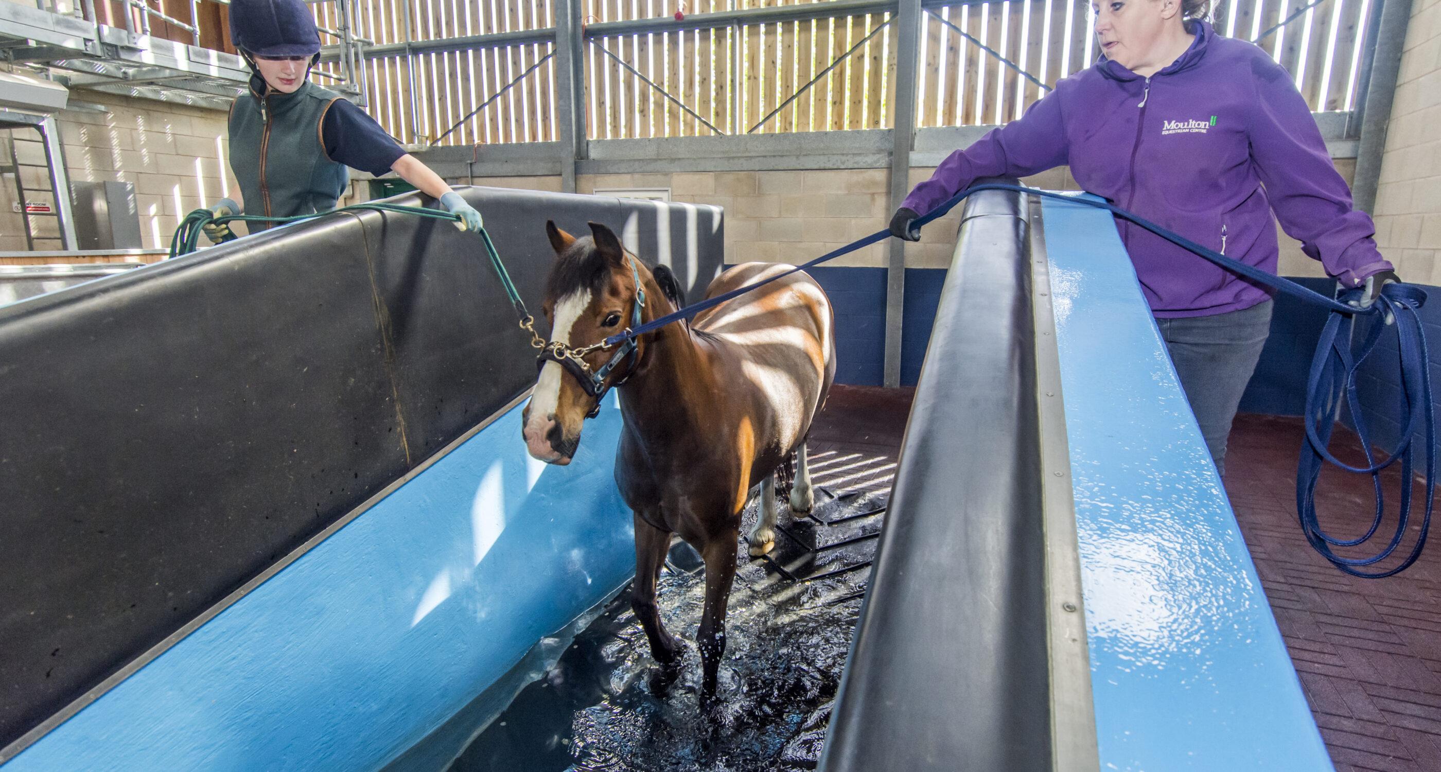 Moulton College Work Based Equine Care