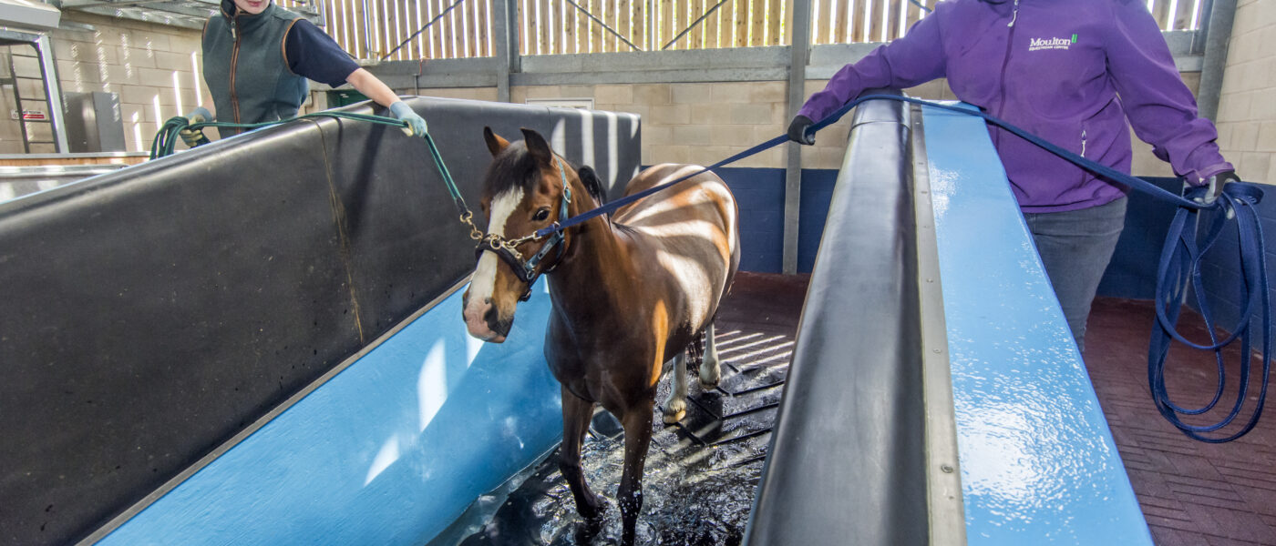 Moulton College Work Based Equine Care