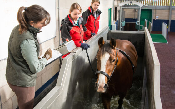 A rehabilitation session taking place on the water treadmill at Moulton Colleges Equine Therapy Centre
