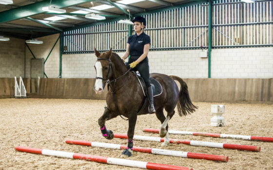 Moulton College Equine Care