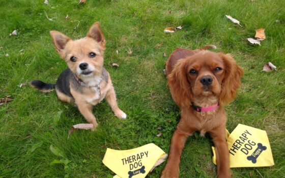 Moulton College therapy dogs Lucy and Pepper