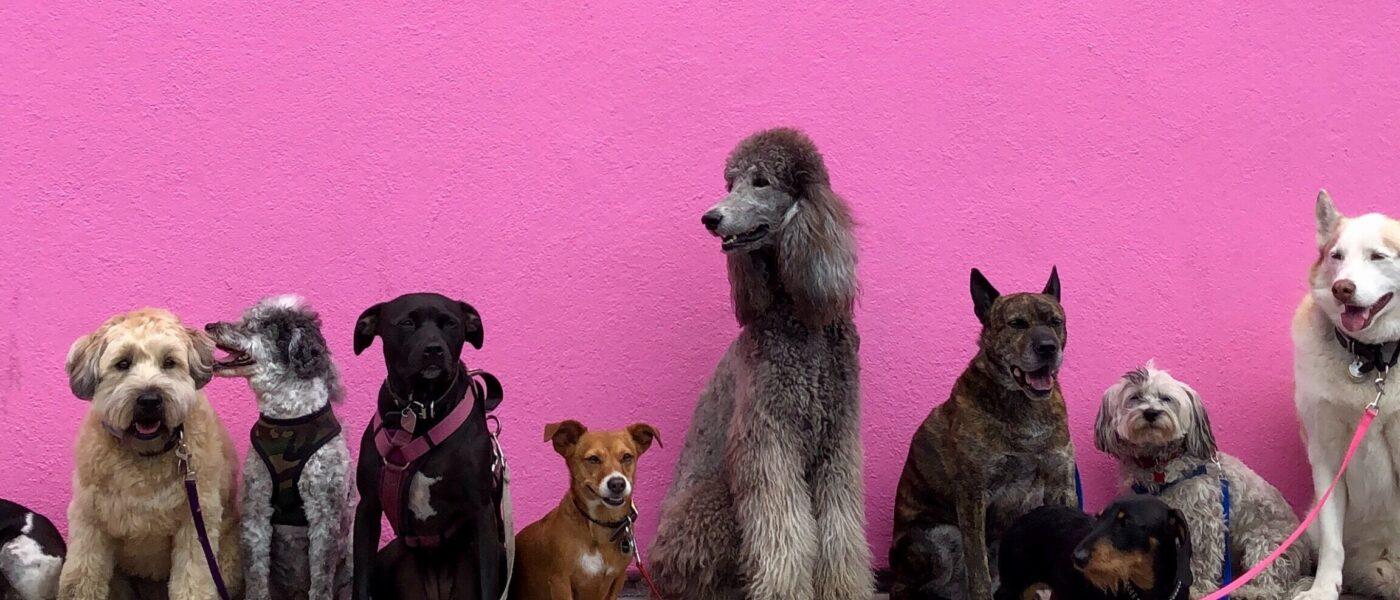 Dogs U6Nlg0Y5Sfs