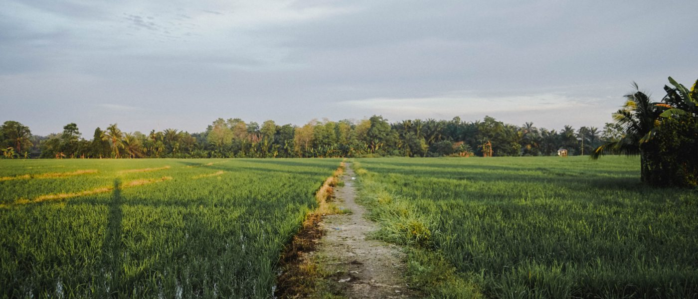 Countryside Qspp_Jav60Q